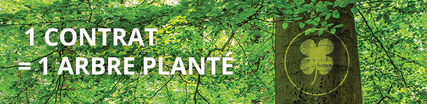 ecologie reforestaction realease capital